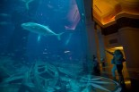 Atlantis - The Palm - Huge Aqaurium